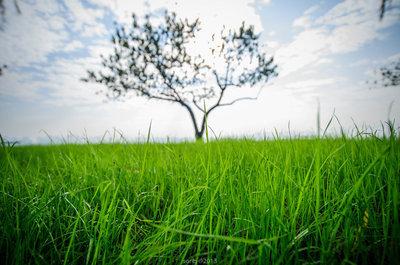 一棵小树风景图片